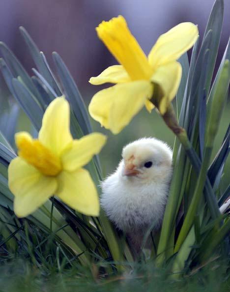 spring-11812